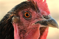 Птицекомплексы