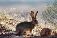 Кроликофермы